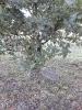 2018 10 Ścieżka Św. Jadwigi - Drzewka-15